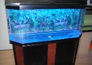 60加仑的鱼缸出售